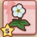 生気を取り戻した花.jpg